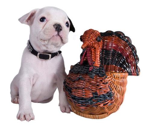 Turkeydog