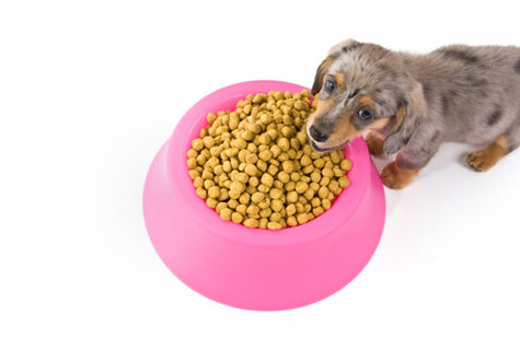 Dog Food Safety, Pet Food Trends & the Right Food for Fido